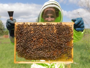 Apiarist holds honeycomb frame up to camera