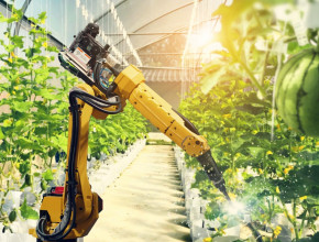 An robotic machine working in a glasshouse