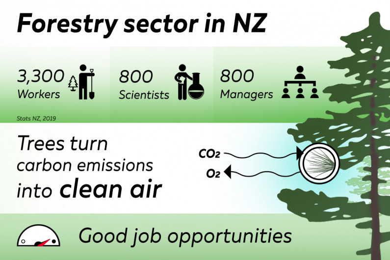 Infographic: Forestry sector in New Zealand; 3,300 workers, 800 scientists, 800 managers (Stats NZ, 2019); Trees turn carbon emissions into clean air; Good job opportunities.