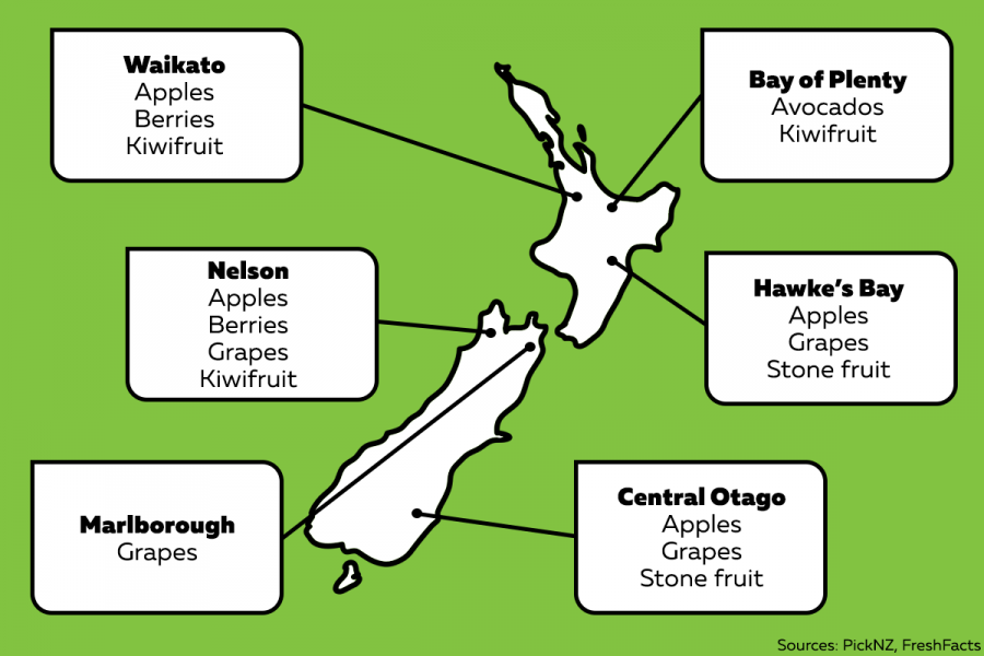 The fruit grown in these regions includes:  Waikato: Apples Berries Kiwifruit  Bay of Plenty: Avocados Kiwifruit  Hawke's Bay: Apples Grapes Stone fruit  Nelson: Apples Berries Grapes Kiwifruit  Marlborough: Grapes  Central Otago: Apples Grapes Stone fruit