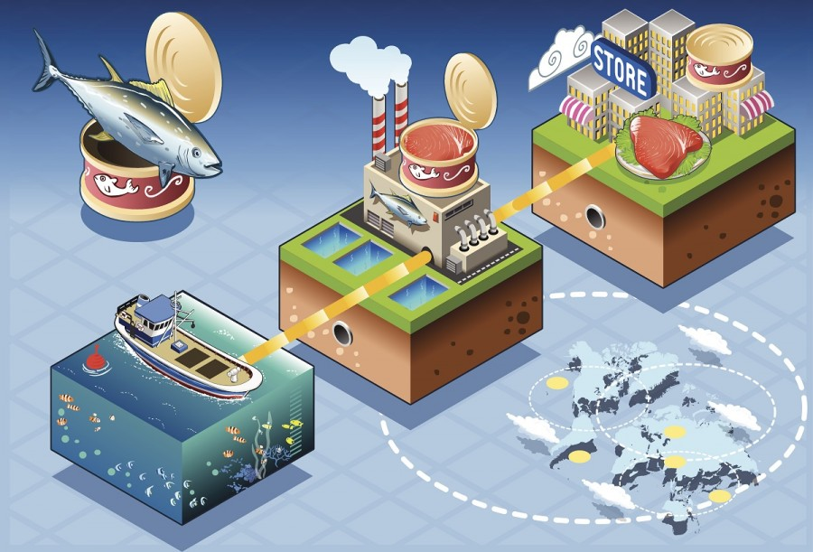 Diagram of tuna fish processing, showing fishing boat to factory to stores in illustration.