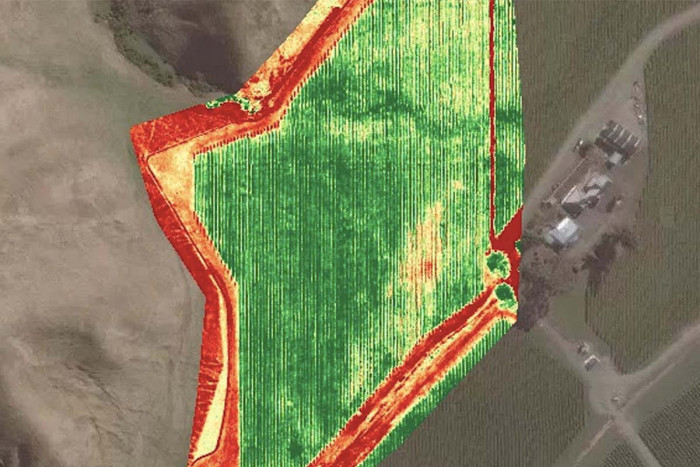 An example of Bevin Lealand's NDVI aerial mapping