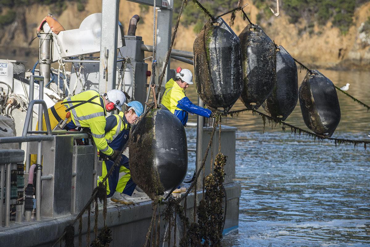 Aquaculture Farmer - Job opportunities