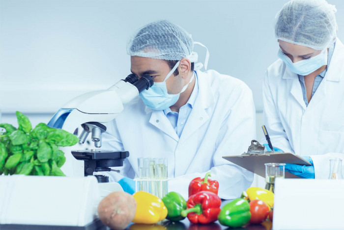 Two food technologists examining vegetables in a laboratory