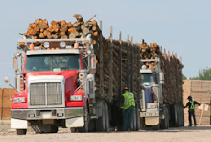 Two drivers inspecting two fully laden logging trucks