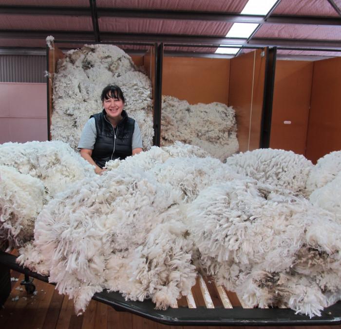 A wool classer sorting through wool